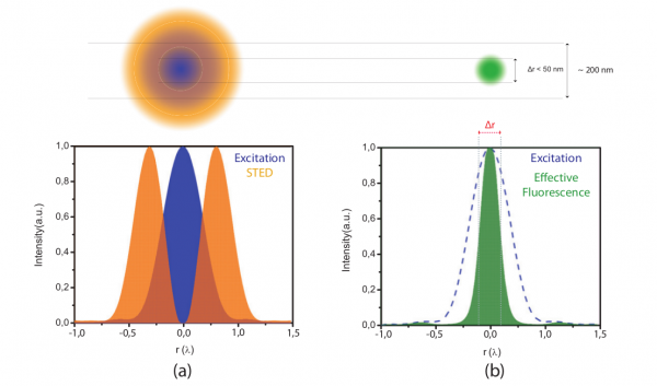 Figure 1. Top: overlapping a doughnut-shaped STED spot with a diffraction limited excitation spot will result in a confinement of the area in which fluorophores are able to fluoresce. Bottom: (a) Graph illustrating the overlap of the intensity of the STED donut shaped spot I_STED (r) (orange) and excitation spot (blue) in one dimension. (b) Graph illustrating the decrease in the width of the effective fluorescence probability h(r) (green) as a result of STED. Δr is the FWHM of the effective fluorescence probability (equation 8.3.)