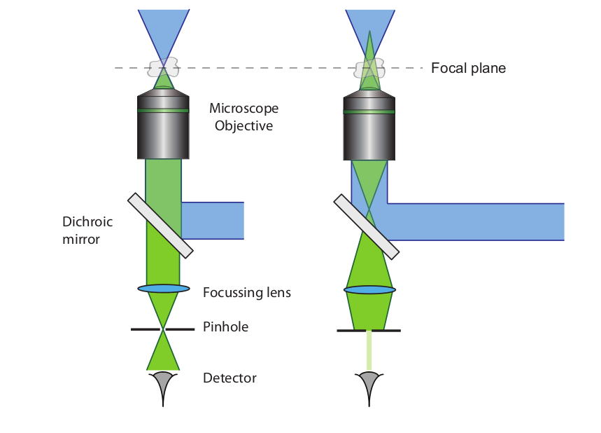 Figure 1. Illustration of the confocal microscope principle. A collimated beam of excitation light (blue) is tightly focused in the sample by a microscope objective. The left image shows that the emission light resulting from the focal spot will be focused through the pinhole and most light will reach the detector. The right hand side shows the case where the emitted light arises from a point that is located outside the focal volume. This light will not be focused through the pinhole and only a very small amount of light is able to reach the detector. As a result, the out of focus fluorescent light is mainly blocked by the pinhole and therefore the background signal is significantly reduced.[1]