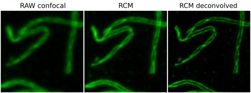 Images show individual chromosomes of a nuclear spread from fixed mouse spermatocytes, immunostained for SYCP3 a component of the synaptonemal complex (Alexa 488-labelling). Raw images were acquired with RCM without re-scanning (confocal) and with re-scanning (RCM). The raw RCM image was deconvolved with the Huygens Re-scan Optical Option. 
