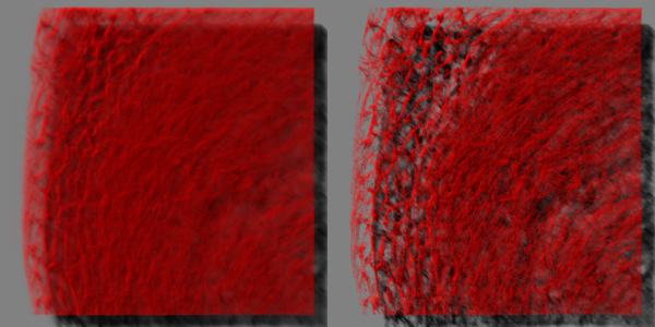 Left: SFP rendering of the original data, imaged using an Andor Revolution spinning disc confocal microscope.